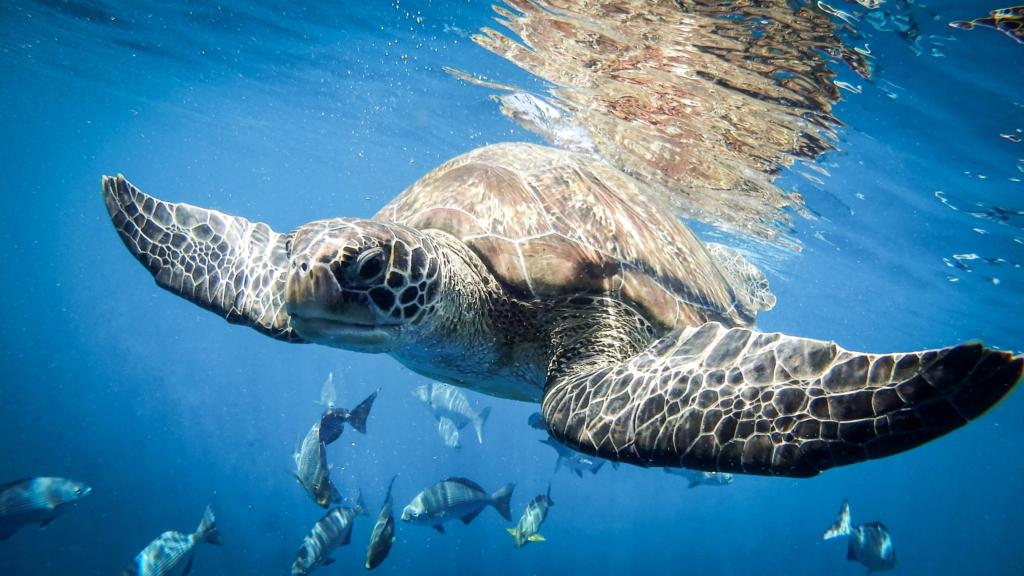 Diving in Similan Islands
