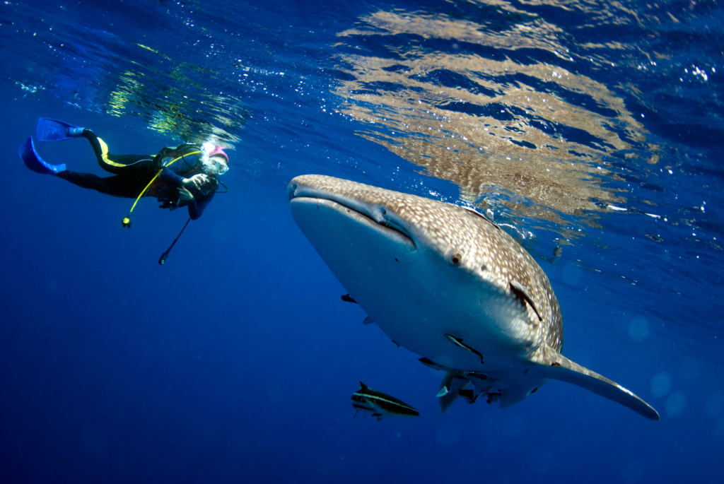 Diving in Hin Daeng - Hin Muang